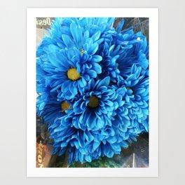 Blue mums Art Print