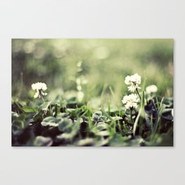 morning flowers fading Canvas Print