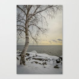 Curves of the Silver Birch by Teresa Thompson Canvas Print