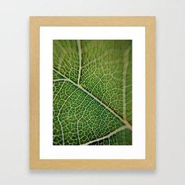 Veins of a leaf Framed Art Print