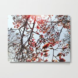 The Yearning of Spring Metal Print