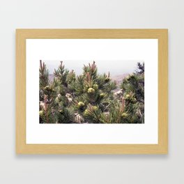 TREELINE Framed Art Print