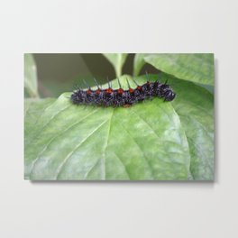 Mourning Cloak Metal Print