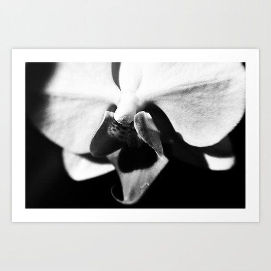 Orchid in Monochrome Art Print