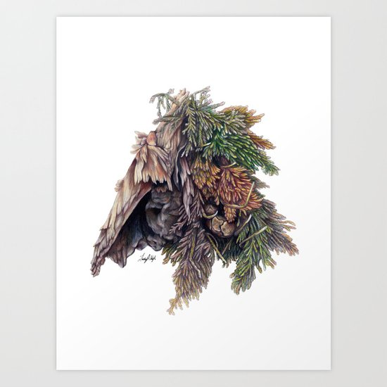 Colors of the Cypress Art Print