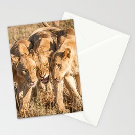 Bonding Lions Stationery Cards