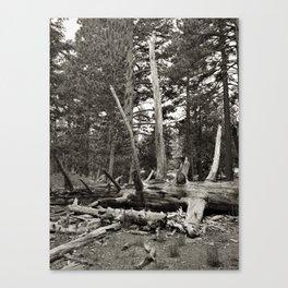 Timber Canvas Print