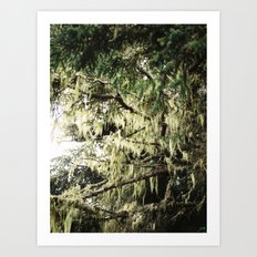 Moss in Trinidad  Art Print