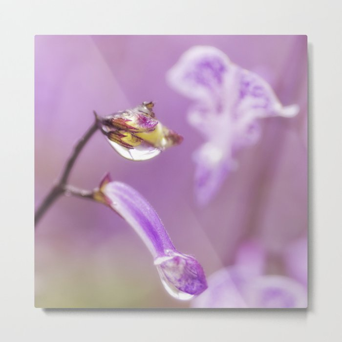 Encased in Beauty Metal Print