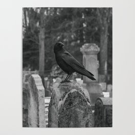 Crow In Shades Of Stone Poster