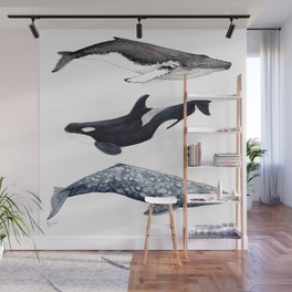 Orca, humpback and grey whales Wall Mural