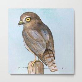 sparrow-hawk Metal Print