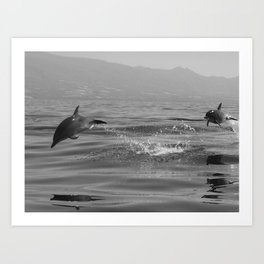 Black and white dolphin race in the ocean Art Print