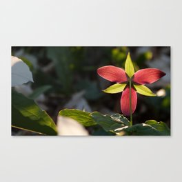 Red Trillium Life Canvas Print