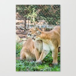 Nature Center & Asheville - Cougars Canvas Print