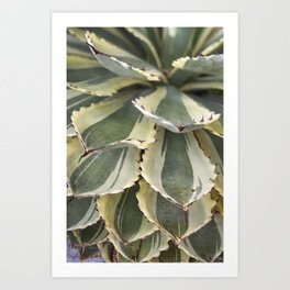Agave in Yellow & Green Art Print