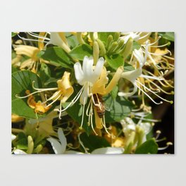 Honeysuckle Bee Canvas Print