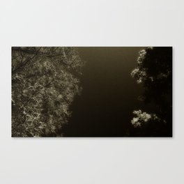 under night Canvas Print