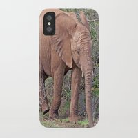 baby elephant iPhone & iPod Cases featuring Baby Elephant by Lynn Bolt