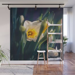 Daffodils from my floral photography collection (mural) Wall Mural