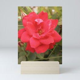 Rose. In Bloom. Mini Art Print