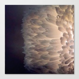 Soft light through the feathers Canvas Print