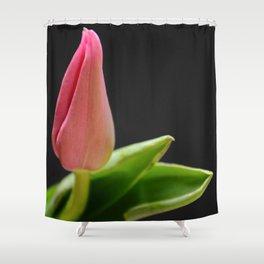 Tulip Still Life Shower Curtain