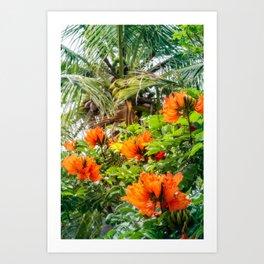 The beautiful red flowers of the African Tulip Tree at Kuto Bay Beach Art Print