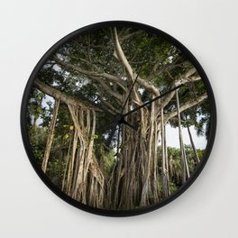Banyan Tree at Bonnet House Wall Clock