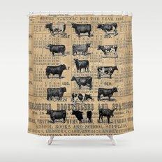 Vintage 1896 Cows Study on Antique Lancaster County Almanac Shower Curtain
