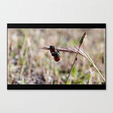 mariquitas - ladybug Canvas Print