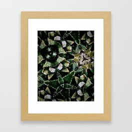 Succulents on Show No 1 Framed Art Print