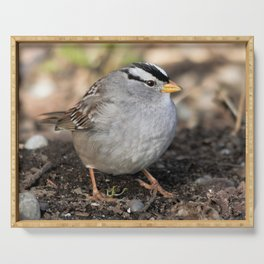 Profile of a White-Crowned Sparrow Serving Tray