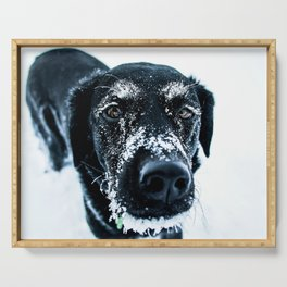Snow Dog // Cross Country Skiing Black and White Animal Photography Winter Puppy Ice Fur Serving Tray