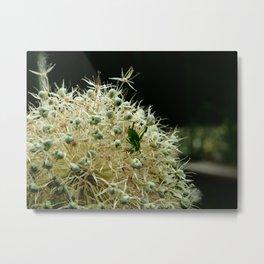 The Grasshopper Metal Print