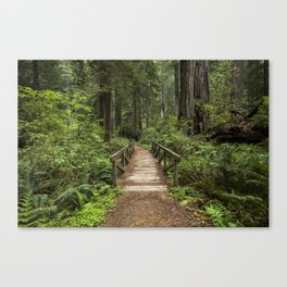 Walk Through Prairie Creek Redwoods State Park Canvas Print