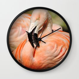 Chilean Flamingo Wall Clock