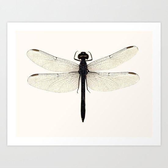 dragonfly #5 Art Print