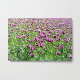 Purple Poppies Metal Print
