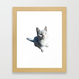 Cat with different eyes Framed Art Print