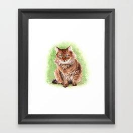 Somali cat portrait Framed Art Print