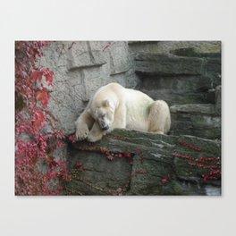Sleepy Eisbär Canvas Print