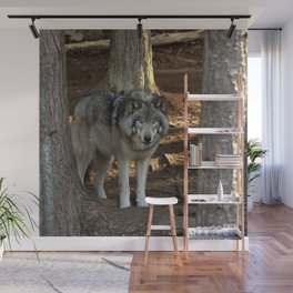 Forest Timber Wolf Wall Mural