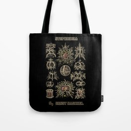 """""""Stephoidea"""" from """"Art Forms of Nature"""" by Ernst Haeckel Tote Bag"""