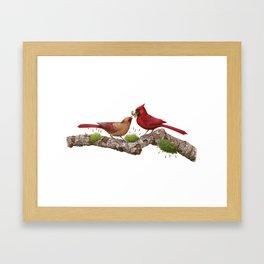 Northern  Cardinals Framed Art Print