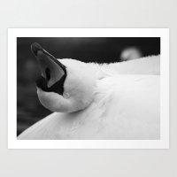 Grooming Swan Art Print