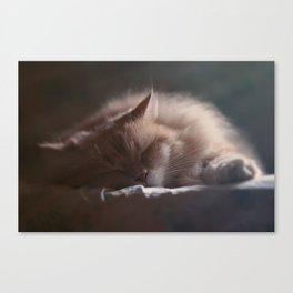 Afternoon nap for a Siberian cat Canvas Print