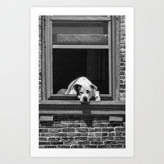 Window Watchdog Art Print