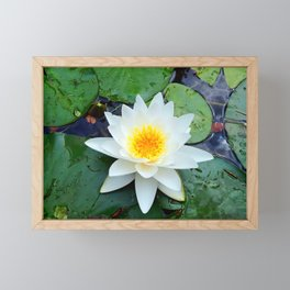 Bright White Lily with Yellow center Framed Mini Art Print