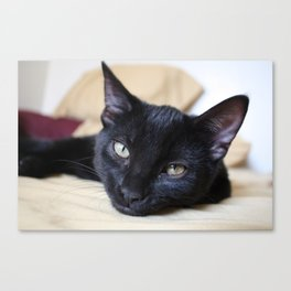 Black Cats are Good Luck Canvas Print